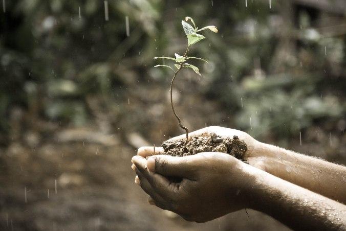 rain-growth